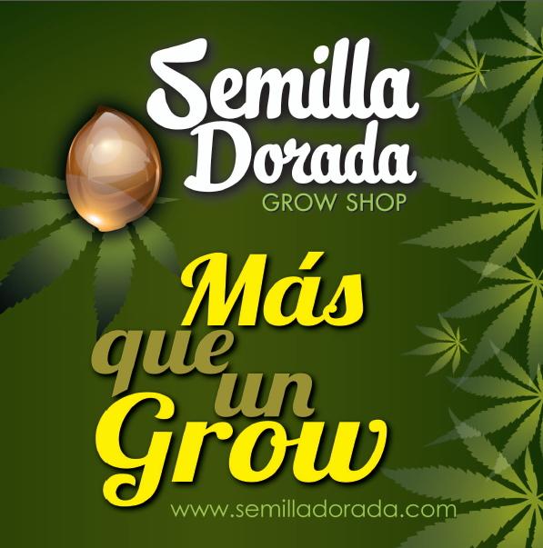 SEMILLA DORADA
